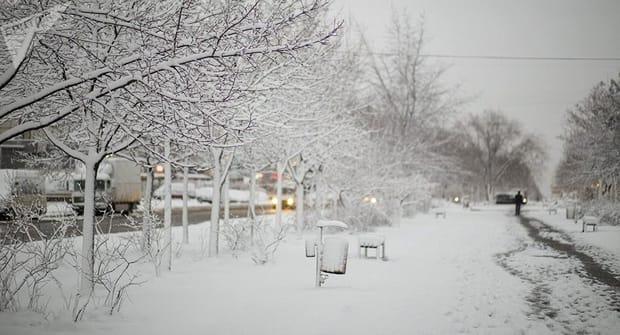 cod galben de ninsoare