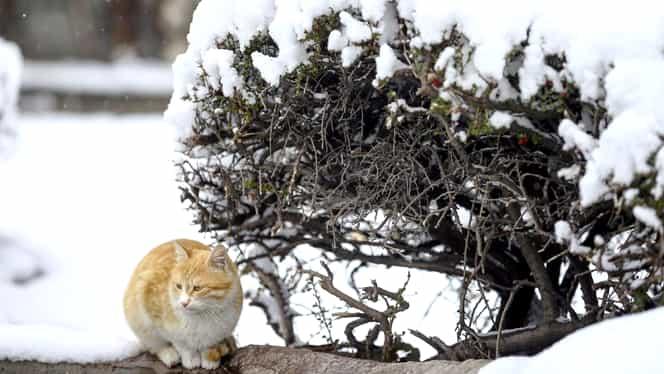 Va ninge în Bucureşti. De mâine, iarna pune stăpânire pe Capitală