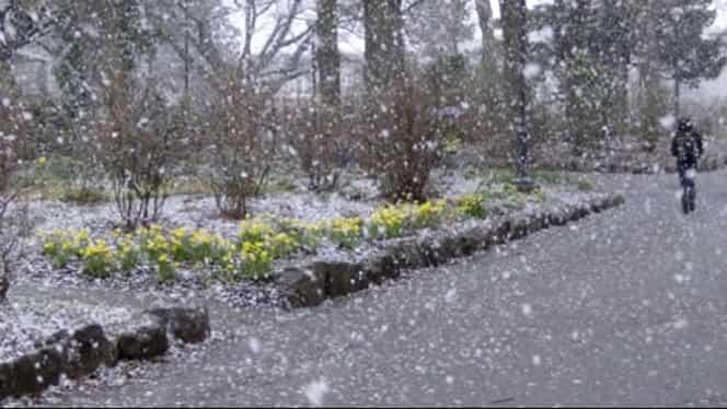 Prognoza meteo 23 ianuarie. Cum va fi vremea în București, Brașov, Cluj-Napoca și Iași. Unde va ninge