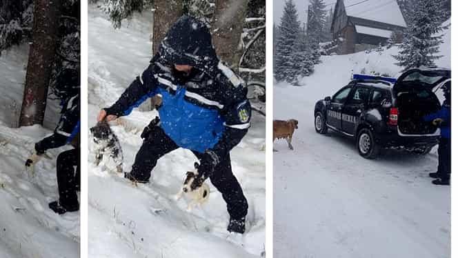 Șase cățeluși au fost salvați din zăpadă! Video cu gestul uluitor