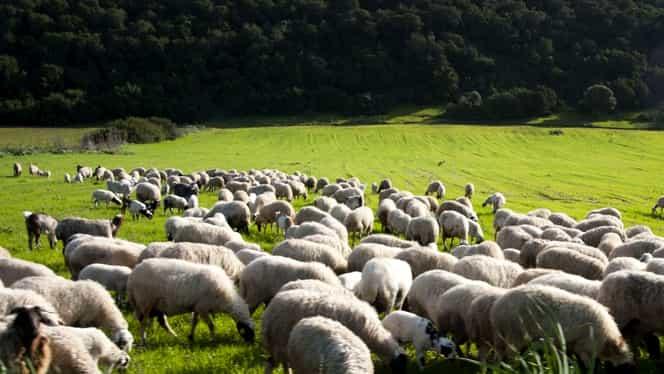 Scutul anti-rachetă de la Deveselu, dat peste cap de oile din zonă!