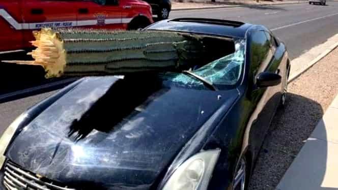 Accident spectaculos! Un american a scăpat incredibil cu viață dintr-un accident cu un cactus. Ce s-a întâmplat