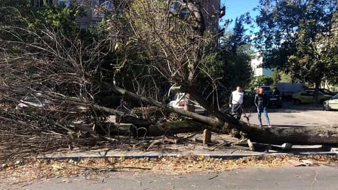 Codul potocaliu de vânt s-a resimțit la Craiova. Un copac a căzut peste o femeie