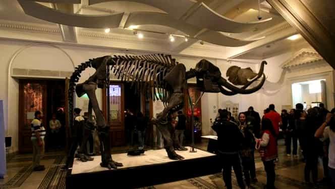 Noaptea Muzeelor! Surpriza pregătită pentru vizitatorii nocturni