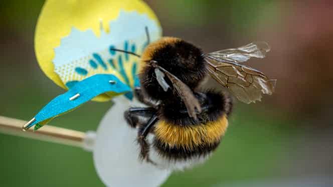 Comisia Europeană, interdicții legat de folosirea unor pesticide care dăunează albinelor. România și Lituania sunt țările vizate