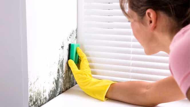 Bicarbonatul de sodiu și detergentul de vase formează o soluție antimucegai care te ajută să păstrezi locuința curată