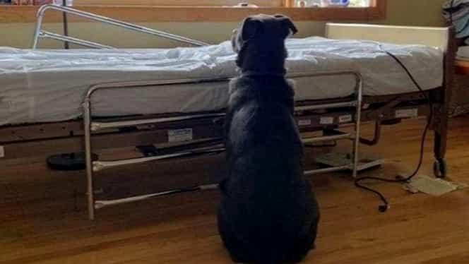 Câinele care și-a așteptat stăpânul decedat lângă patul de spital. Povestea emoționantă a devenit virală