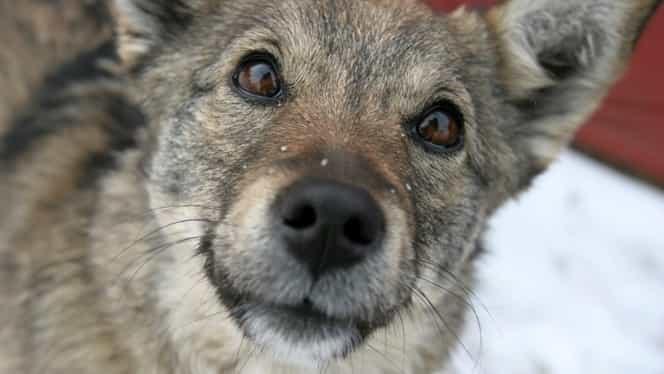 Un nou act de cruzime fără margini! Câine găsit spânzurat de o țeavă de calorifer. Poliția îi caută pe vinovați