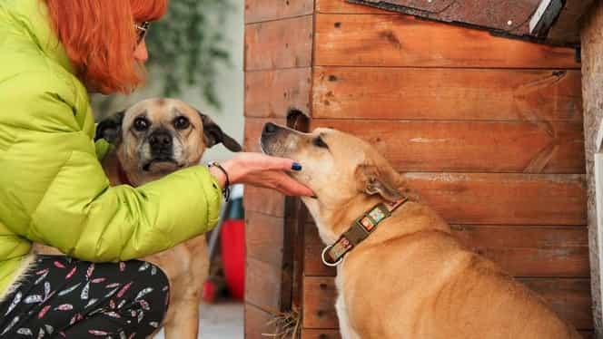Ce se întâmplă cu animalele Cristinei Țopescu! Apel către prietenii fostei prezentatoare