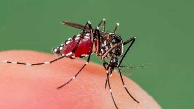 Cum scapi de țânțari! Sistemul care detectează și ucide țânțarii chiar de pe telefon