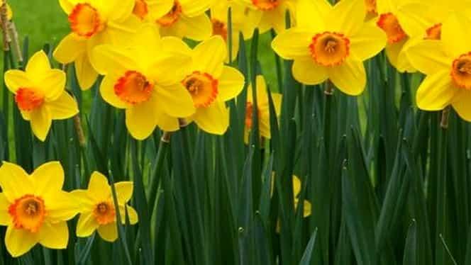 Mesaje de Florii. Cele mai frumoase urări. Spune La mulţi ani celor care poartă nume de flori