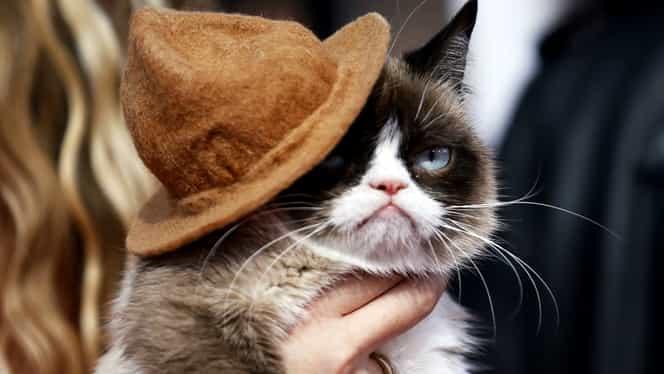 Foto. Grumpy Cat, pisica vedetă ce eclipsează multe vedete de la Hollywood