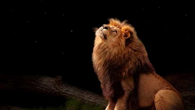 Horoscop zilnic: vineri, 6 martie 2020. Nativul Leu iese în evidență orice ar face