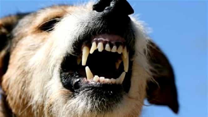 Un copil din Vaslui a fost mușcat de față de câinele familiei! SMURD a intervenit cu elicopterul