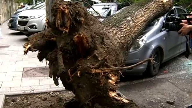 Vîntul a făcut ravagii în municipiul Deva: maşini distruse, copaci prăbuşiţi