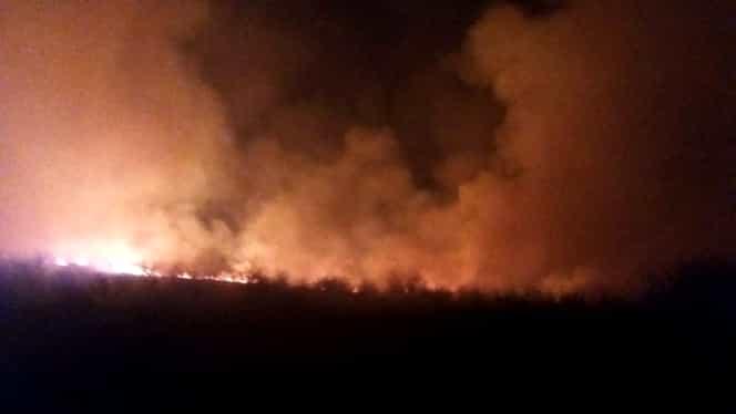 Intervenţie a pompierilor îngreunată de vântul puternic, în Constanţa. Pompierii au stins cu greu un incendiu puternic de lângă Crama Murfatlar
