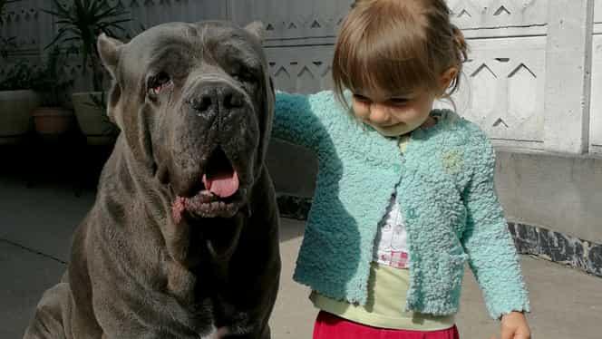 Caz şocant într-un parc din Iaşi! Un câine corso fioros, fără botniţă sau lesă, s-a apropiat de o fetiţă. Strigător la cer ce a urmat