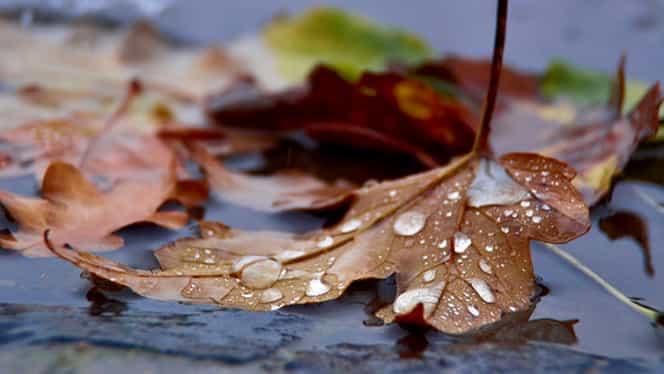 Prognoza meteo 25 octombrie. Vremea se ameliorează puţin, vântul îşi reduce din intensitate