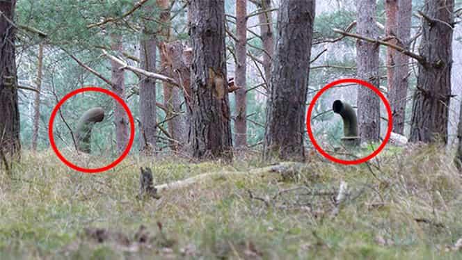 Doi prieteni se plimbau prin pădure, când au găsit nişte ţevi. Au făcut apoi o descoperire uluitoare