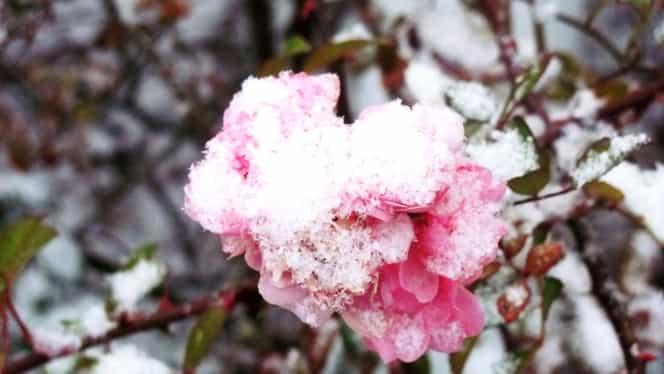 Prognoza meteo pe două săptămâni! Meteorologii au anunţat când va ninge, dar şi când va începe primăvara cu adevărat
