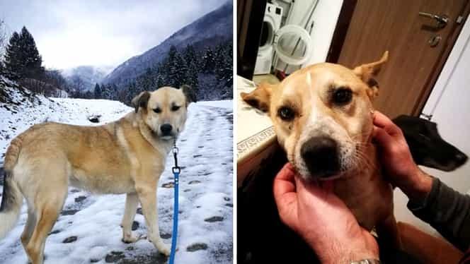 Unul dintre câinii jurnalistei Cristina Țopescu a fost adoptat. Un alt patruped ce aparținea vedetei așteaptă în continuare o familie