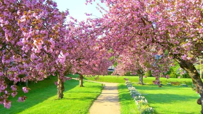 Prognoza meteo 14 aprilie. Ne aşteaptă o vreme călduroasă în toate zonele ţării