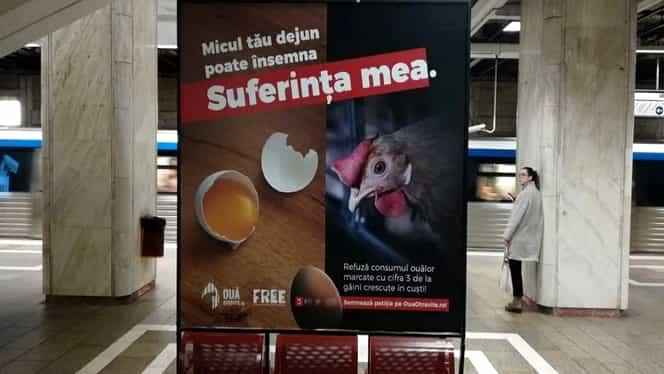 Campanie de informare inedită la metrou. Asociația F.R.E.E. sare în apărarea găinilor crescute în cuști, ale căror ouă sunt marcate cu cifra 3
