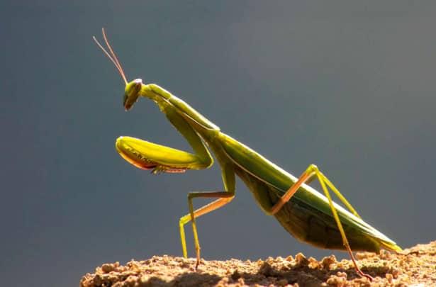 Fenomen periculos! Dispar insectele de pe pământ