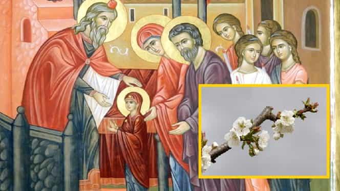 Intrarea Maicii Domnului în Biserică, ziua în care crenguțele de măr se pun în apă sfințită. Ritualul care atrage bunăstarea
