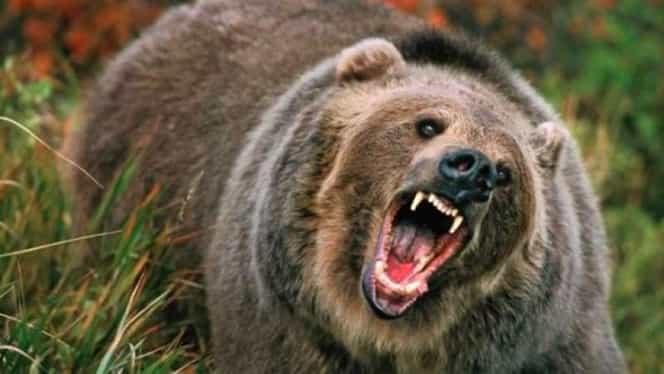 Vânător ucis de urs în Bistrița Năsăud! Filmul întregului eveniment