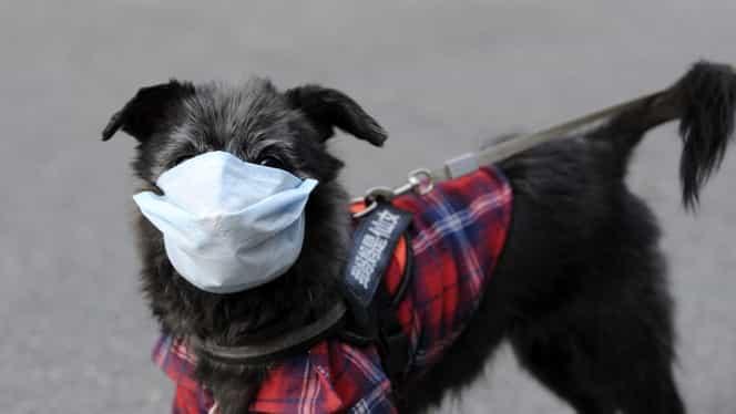 Chinezii, sfătuiți să renunțe la obiceiul de a-și săruta animalele de companie! Măsura autorităților vine după ce un câine a fost depistat cu COVID-19