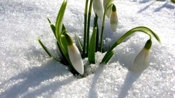 Prognoza meteo 2 februarie. Vremea se încălzeşte