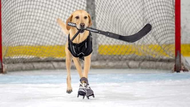 Primul câine care patinează! A oferit o lecție de viață oamenilor!