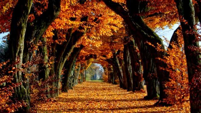 Meteorologii anunţă răcirea vremii, urmată de temperaturi de 16 grade Celsius, între 3 şi 7 noiembrie. Prognoza meteo pe două săptămâni!