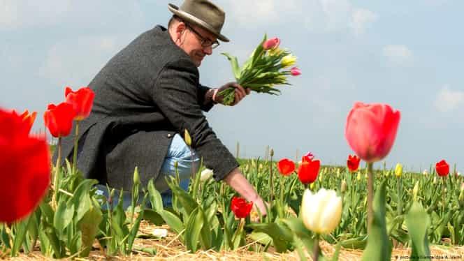 Olandezii, îndemnați să cumpere flori, nu hârtie igienică! Horticultorii aruncă munți de flori