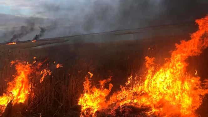 BREAKING NEWS. Vremea neobișnuit de caldă a generat 270 de incendii în România. Peste 300 de pompieri au intervenit. VIDEO