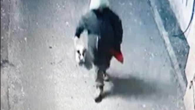 A fost prins bărbatul care a spânzurat un câine de o țeavă de gaze! Imagini cu el și cățelul surprinse de o cameră de supraveghere