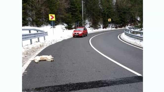 Câine împușcat pe un drum public! Imagini șocante au fost publicate pe Internet