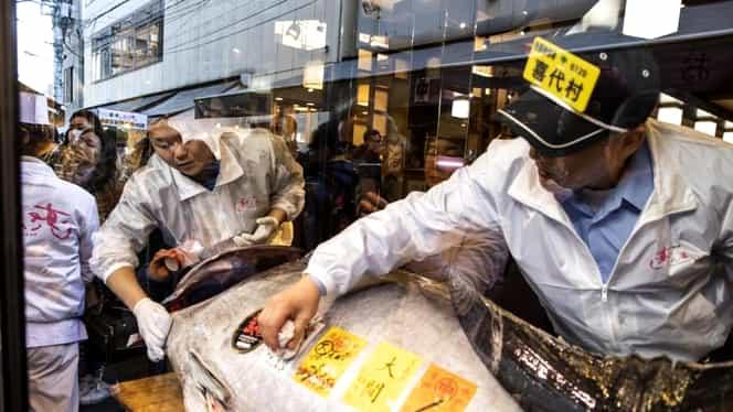 Regele tonului a plătit 3,1 milioane de dolari pentru un pește de 278 de kilograme. Este record absolut!