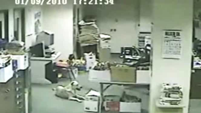 VIDEO Un câine simte cu câteva secunde înainte cutremurul! Vezi cum reacţionează!