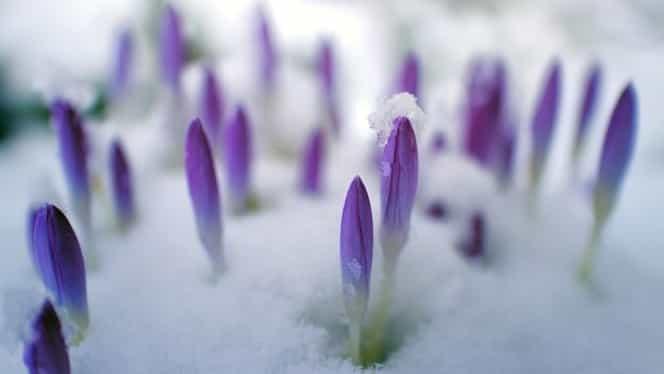 Meteo: Cum va fi vremea duminică, 11 martie