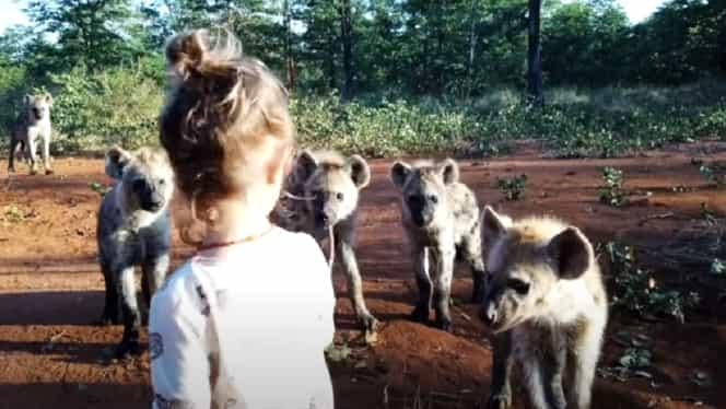 Ce s-a întâmplat când o fetiță s-a apropiat prea mult de niște hiene. Videoclipul devenit viral
