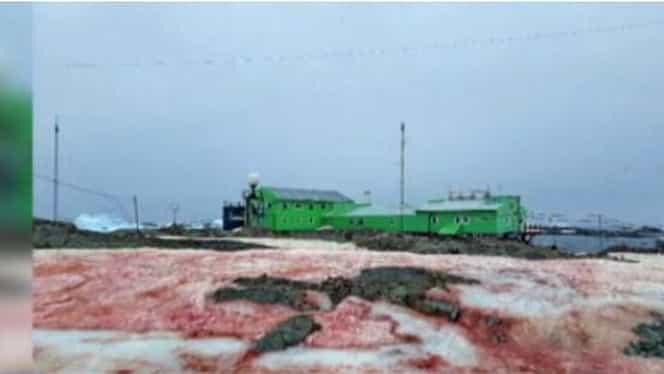 Fenomen apocaliptic la Polul Sud! Zăpada s-a făcut sângerie
