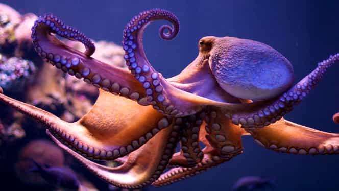 Uimitor! Cercetătorii au găsit oraşul caracatiţelor! Unde se află Octlantis! GALERIE FOTO