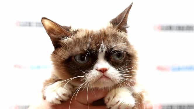 A murit Grumpy Cat, cea mai celebră pisică de pe Internet. Avea peste 8 milioane de fani doar pe Facebook