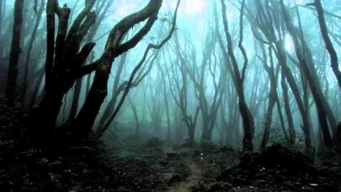 Inclusă în topul celor mai înspăimântătoare locuri din lume, pădurea Hoia-Baciu îi uimeşte chiar şi pe cercetători! GALERIE FOTO