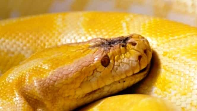 Zodiac chinezesc pentru sâmbătă, 28 martie. Șarpele are nevoie de ajutor din partea unor persoane mai experimentate