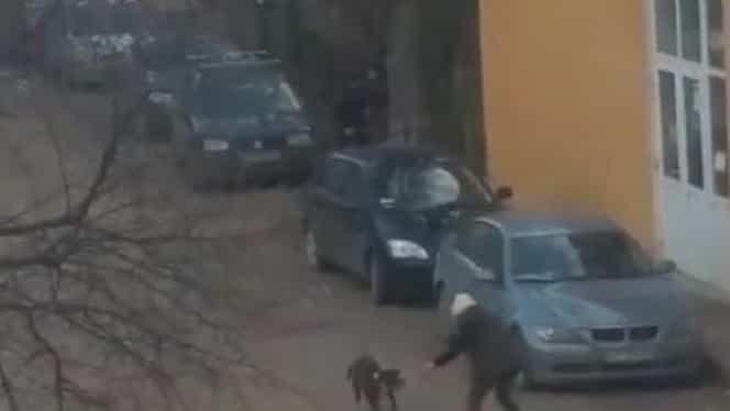 Video! Trei ieşeni atacaţi de doi câini de luptă! Una dintre victime a rămas fără un testicol!