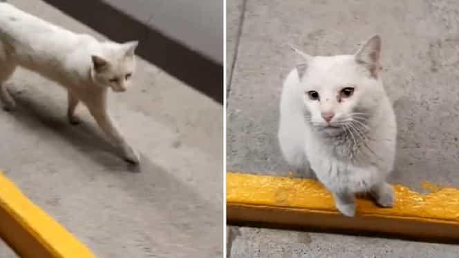O pisică a străzii a intrat cu o femeie într-un supermarket, iar ce a urmat dovedește cât de deștepte sunt micile feline – Video