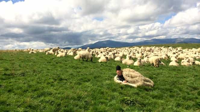 """Ghiță Ciobanu, interviu inedit în The Guardian: """"Comerțul cu oi a devenit o batjocură"""""""